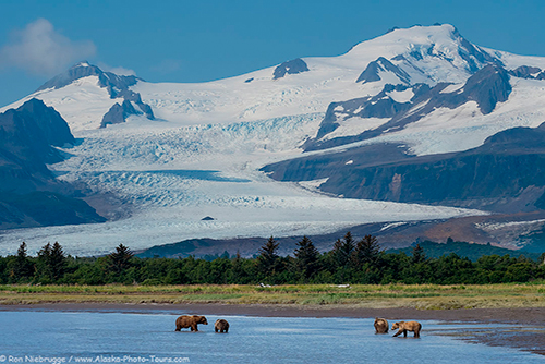 Katmai Bears Photo Tour
